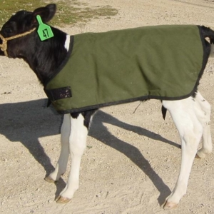 Bettermilk Holstein Calf Coat