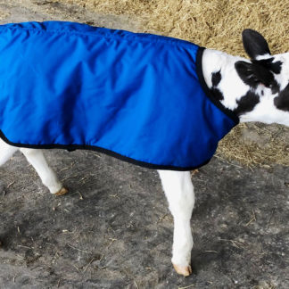 Bettermilk Blue Holstein Calf Coat